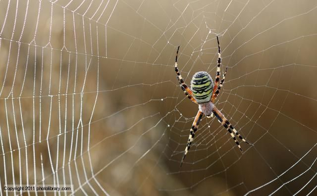 common bugs in web application